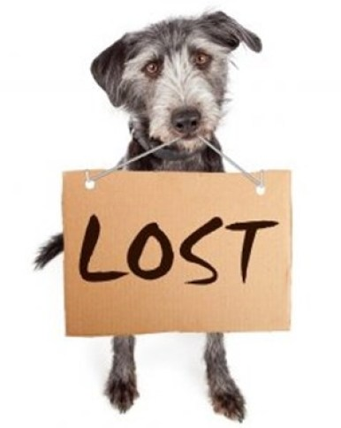 A TIP TO FIND LOST DOG