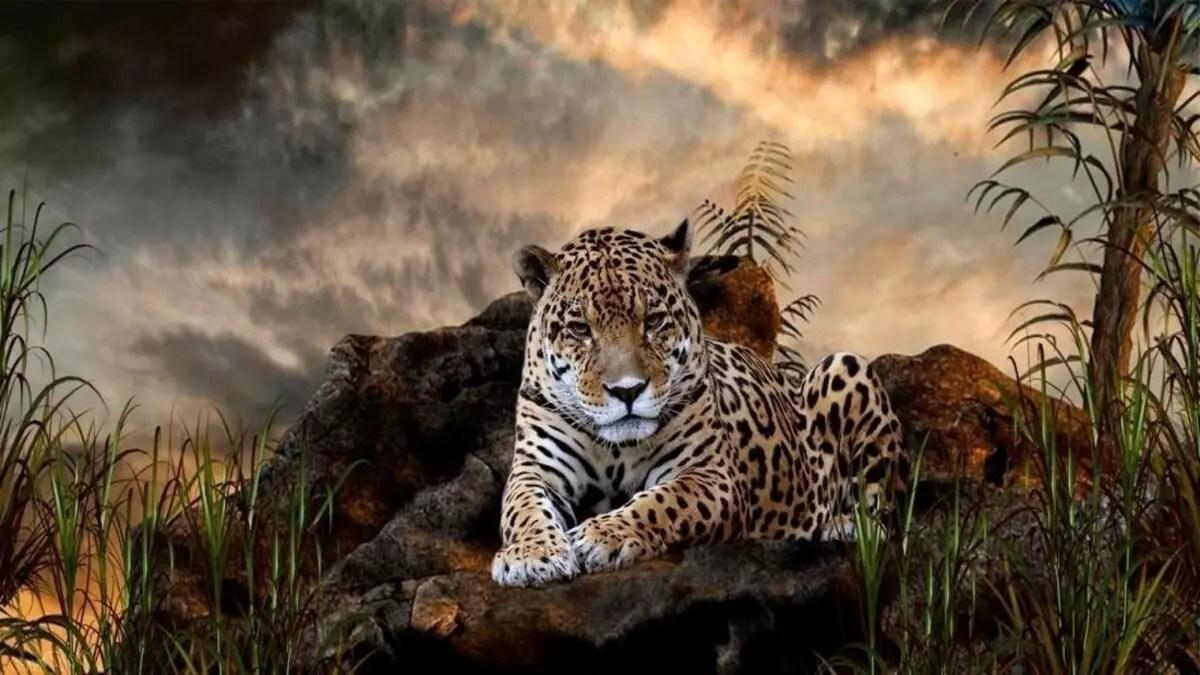 Shamanic Healing in the Land of the Jaguars and total reconnection with the Jaguar