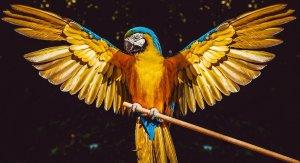 parrot-3620776_1280