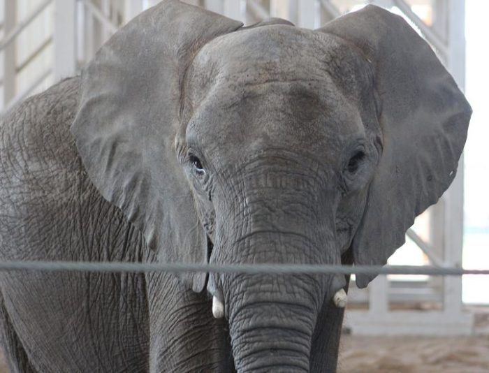 elephant-27a