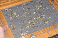 Pulp & Lichen still in the deckle