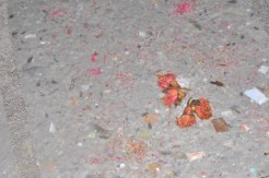 Recycled paper pulp with Red Flowering Gum