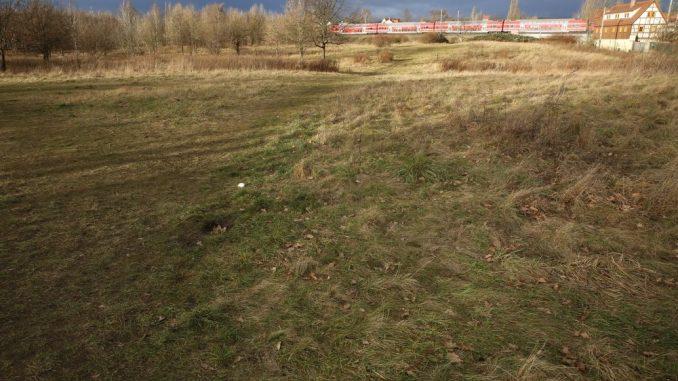 Die Hufewiese wird nicht bebaut. Foto: Thomas Türpe