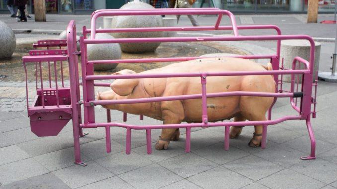 Die Attrappe eines Schweins steht in einem Käfig. Foto: iAnimal © Julia Diedrich