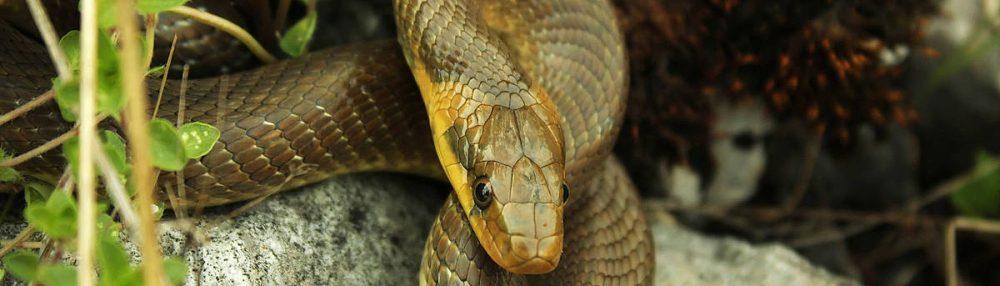 Schlangenalarm in der Altmarkt-Galerie!