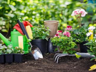 Der Frühling steht - jetzt gibt es wieder viel zu tun im Garten. (©Maksim Kostenko - Fotolia.com)