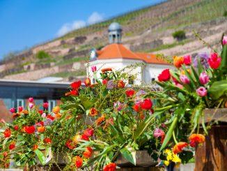 Auf Schloss Wackerbarth wartet am kommenden Wochenende ein buntes Markttreiben zum Frühlingserwachen und Osterfest. (Foto: PR)