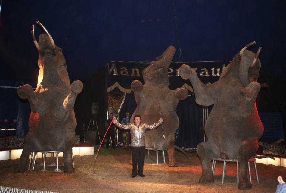 Vorhang auf für Circus Afrika