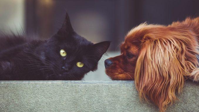 Hunde und Katzen sollten mit einem Chip registriert werden. Foto: Pixabay