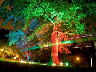 Die Lichterfahrten der Parkeisenbahn lassen den Großen Garten in einem tollen Licht erstrahlen. Foto: PR