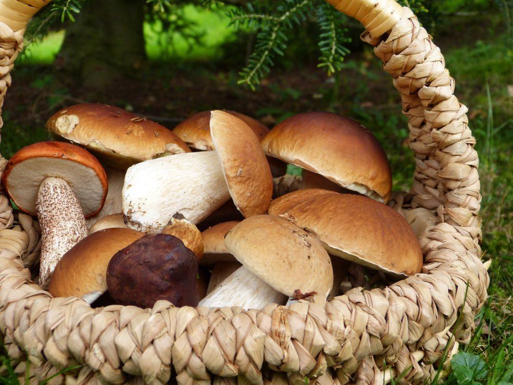 Pilze sammeln auf dem Urnenhain Tolkewitz