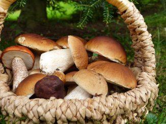 Pilze suchen kann man nicht nur im Wald. In Dresden geht das jetzt auch auf dem Urnenhain Tolkewitz. (Foto: Pixabay)