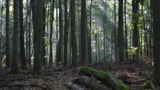 Erlaubtes Verwildern–in Dresden bekommt der Wald besonderen Schutz. (Foto: Thessa Wolf)