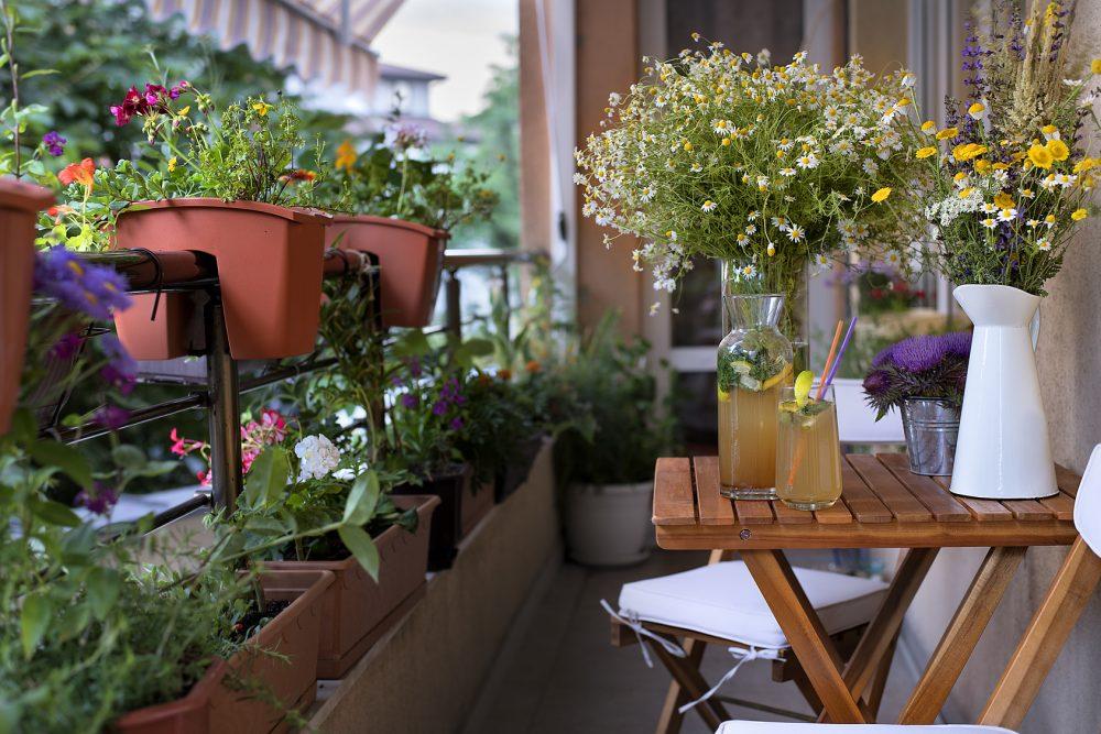 Naturoase Stadtwohnung: Platz ist in der kleinsten Hütte