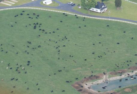 Aerial View of Cow Pasture