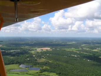 View from a Cub