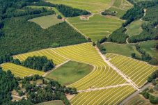 I just love the way tobacco fields look from the air near harvest time