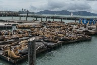 Seals on Docks