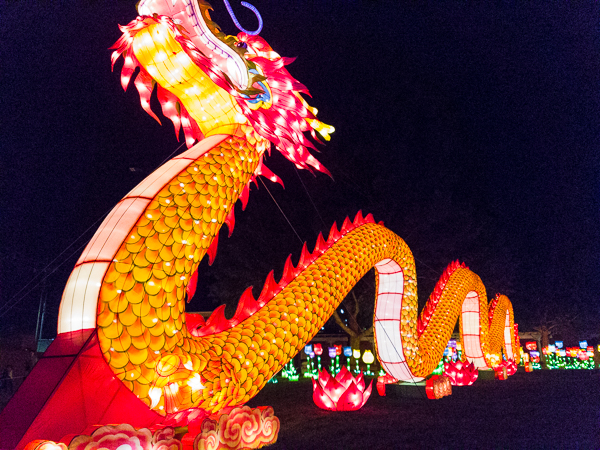 Dragon - Chinese Light Festival