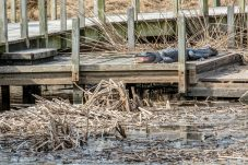 January - Brazoria National Wildlife Refuge