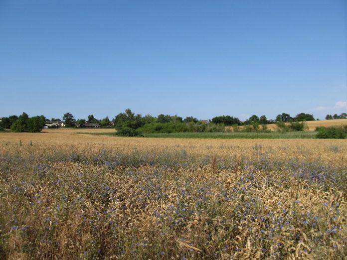 Marken set fra syd - med vandhul i midten