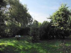 Toppen hviler på æbletræ med krykke