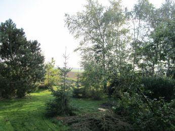Halvvejs gennem græsslåningen vil jeg tage et billede af, hvor langt og frodigt græsset er nu