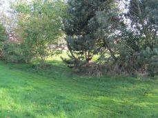 Kom og se hvor fint græsset står de fleste steder