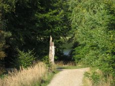 Endelig, det fortryllede blik ned til skovsøen