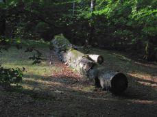 Her får svampede træstammer lov at ligge