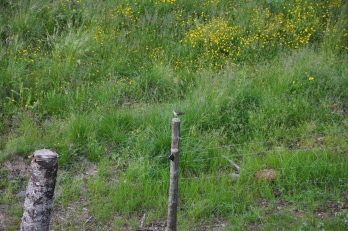 Mudderklire - langt næb til at samle føde på overfladen af mudret vandhul?