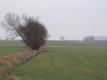 14. Februar ser marken ikke helt så grøn-frisk ud som for et par uger siden