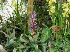 Blomster i orchide-parken på Madeira
