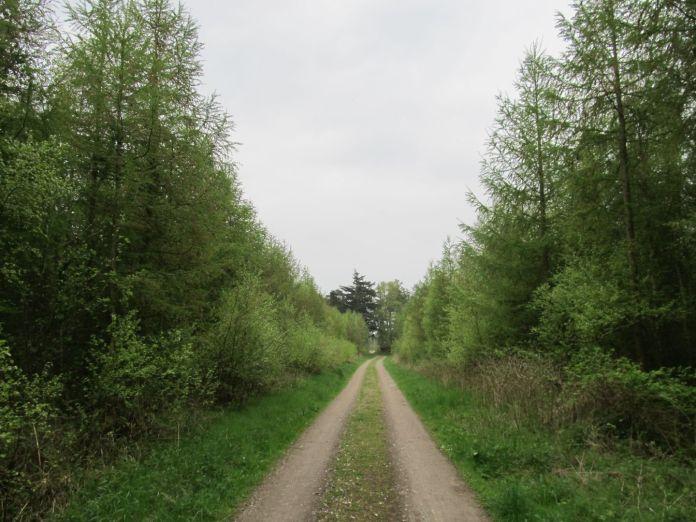 Skovvej i privatskov - der var læ