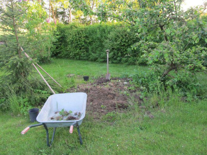 Græstørv gravet væk fra indkørselen er lagt til tørre og skal hakkes i stykker, kvæler en del Skvalder mv.