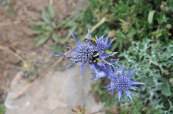 Biens bukser er gule pollen fra blomsterne