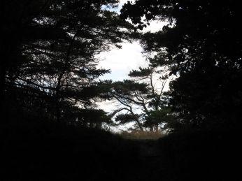 På vejen tilbage er det som at gå i en skovtunnel