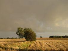 25.August - alt er høstet, smuk aften