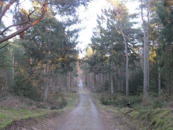 Efter 3 km. går turen op ad stenalder-kystskrænten - ovenpå er der muld, så bøgetræer kan vokse godt