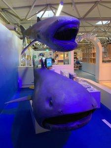 【静岡 観光】東海大学海洋科学博物館 水族館