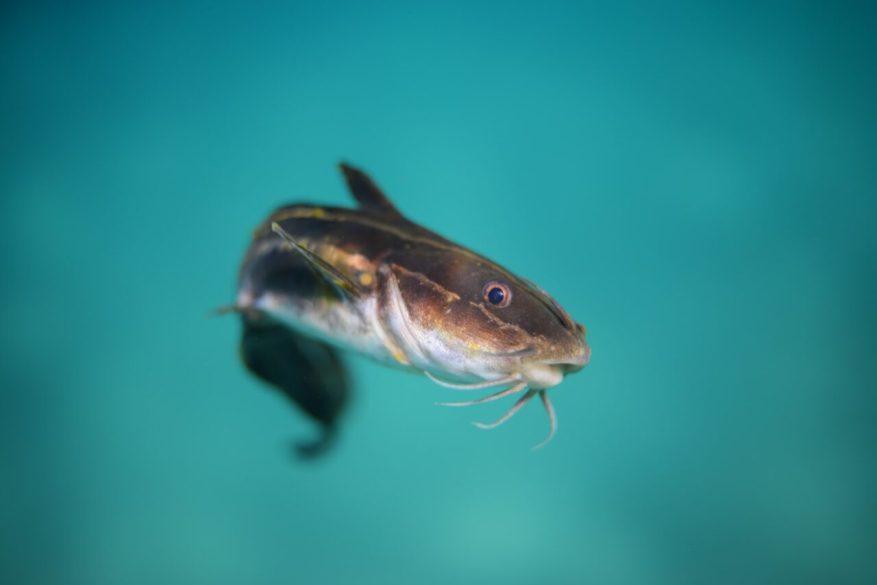 Budidaya Ikan Lele inspirasi bisnis skala kecil