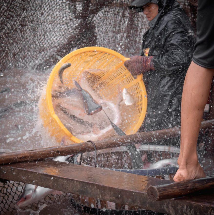 kolam - Budidaya Ikan Lele inspirasi bisnis skala kecil