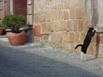 The ballerina cat in Tuscania, Italy