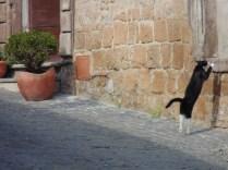 The ballerina cat in Tuscania, Italy