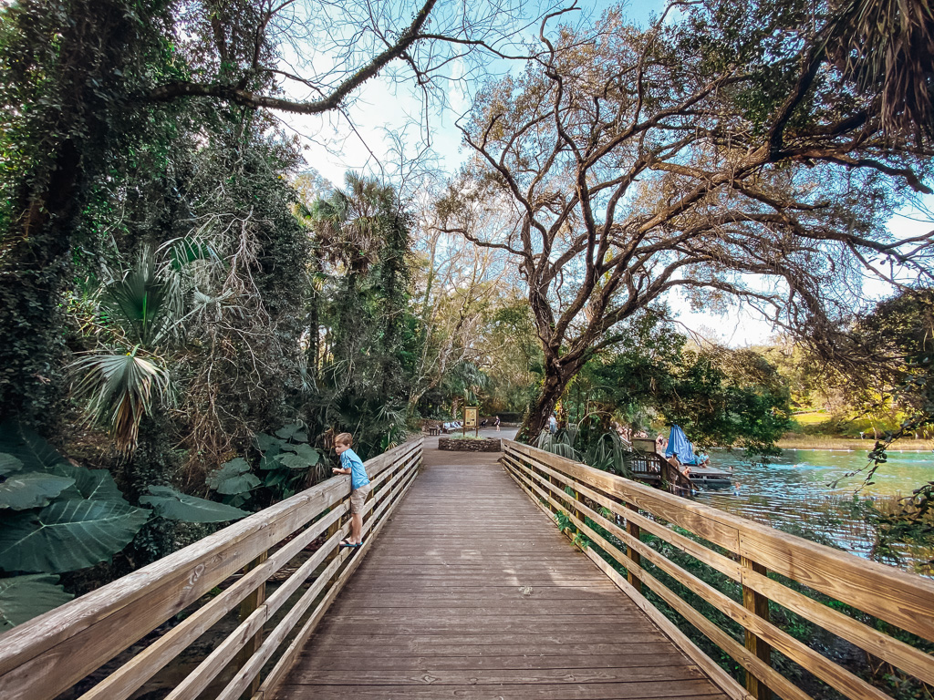 family friendly florida spring rainbow springs with kids no alligators
