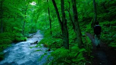 Japan Life blog recap Oirase hiking -5