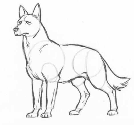 Як намалювати вовка олівцем поетапно