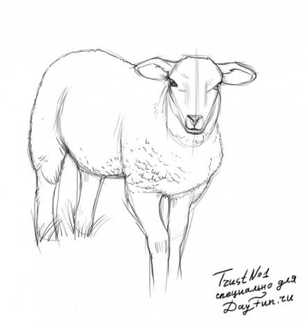 Як намалювати овечку олвцем поетапно
