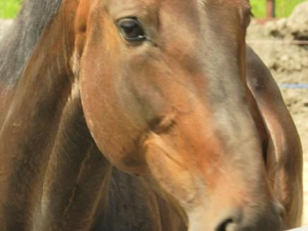 My friend's horse.