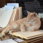when is a desk a throne? when a cat says it is